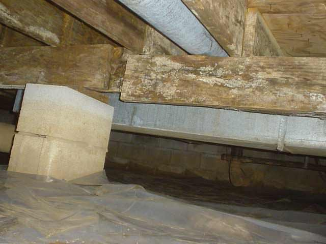 Home Mould Investigation In Chatham London Sarnia