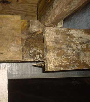 Extensive basement rot found in Sarnia by Advanced Basement Systems